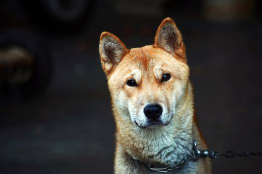 canine #408725