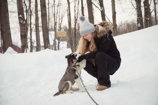 Woman petting young Siberian dog #408738