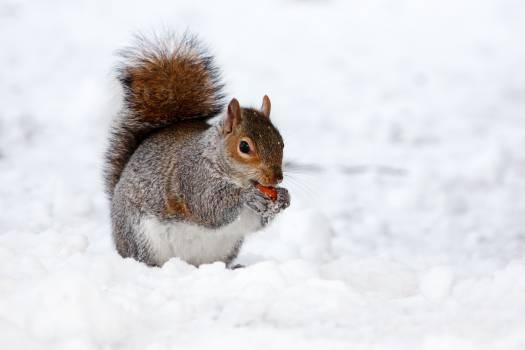 squirrel #408773