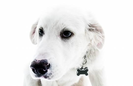 White Dog Minimal Free Photo #408894