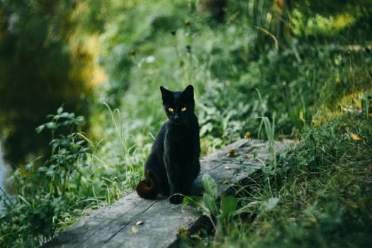 Black Cat Pond Free Photo #408956