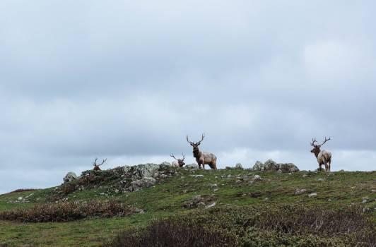 Reindeer #408981
