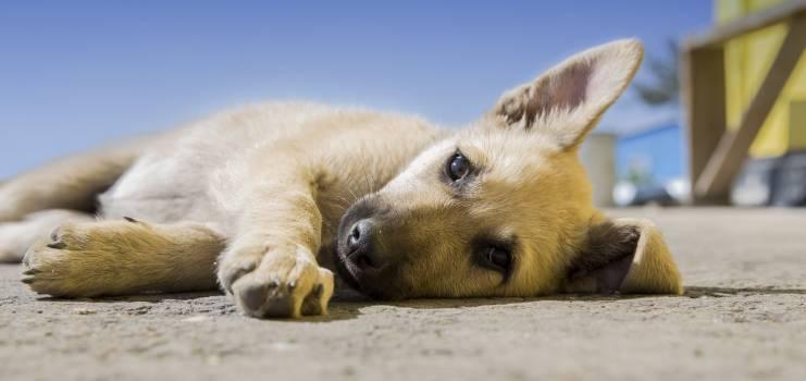 Dog Puppy #409001