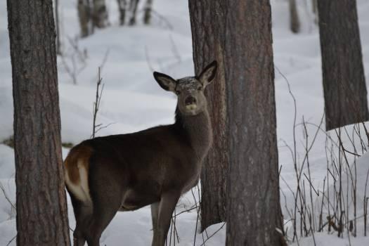 Deer Tree Forest #409104