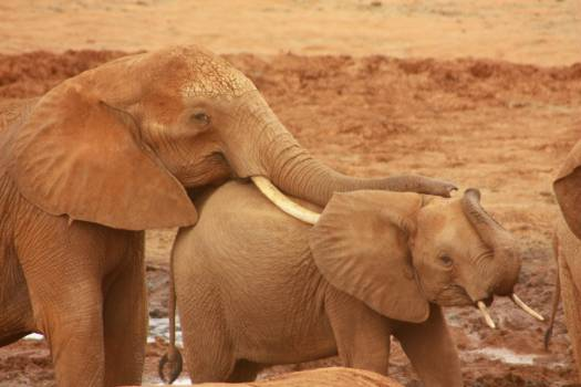 Elephants #409137