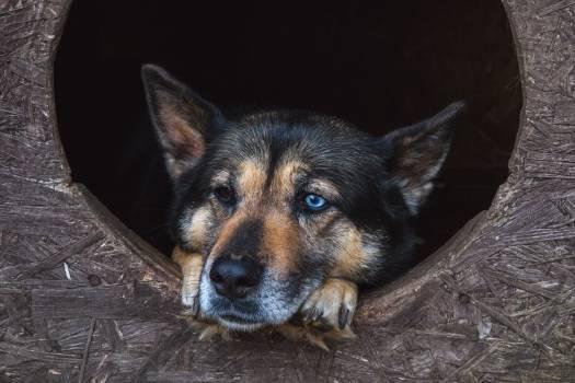 Dog blue black eyes #409147