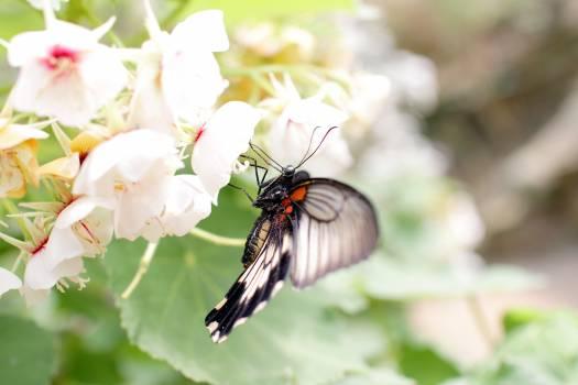 Butterfly #409163