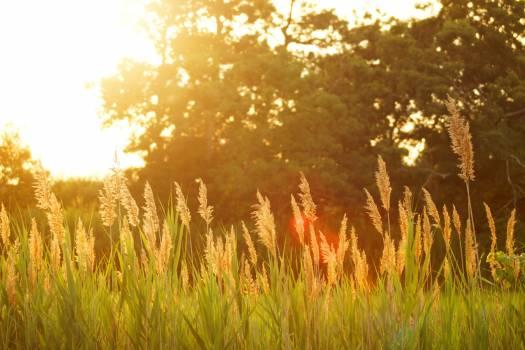 Sunset Field #409186