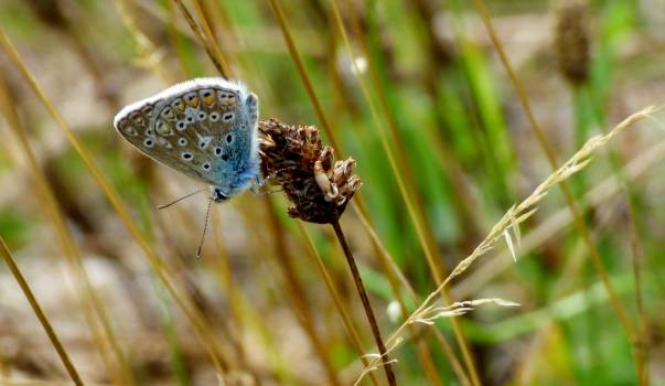 Butterfly #409187