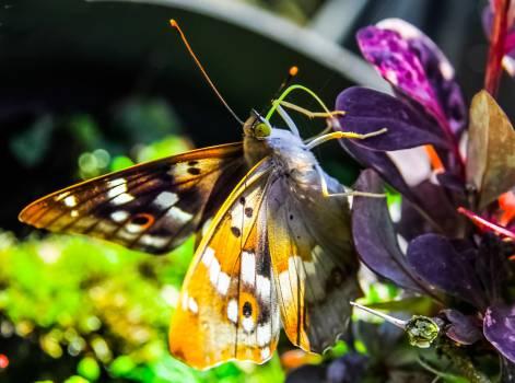 Butterfly #409190