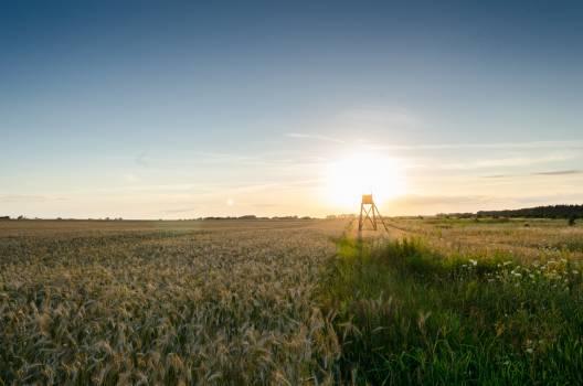Field Sunset #409198