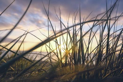 Sunrise Grass #409201