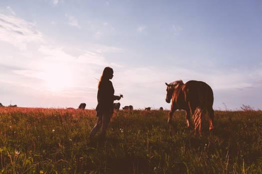 Girl Horse Sunset Field Woman Free Photo #409204