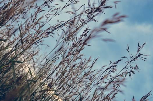 Grain Field Sky #409226