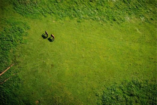 Green Grass Horses #409299