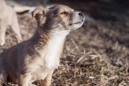 Puppy Dog #409302