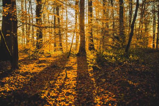 Shadow Autumn Forest Free Photo #409305