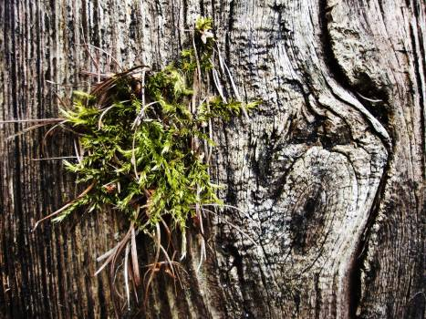 Old Tree Moss #409313