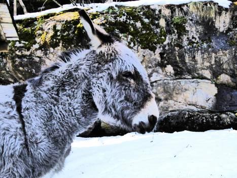 Donkey #409373