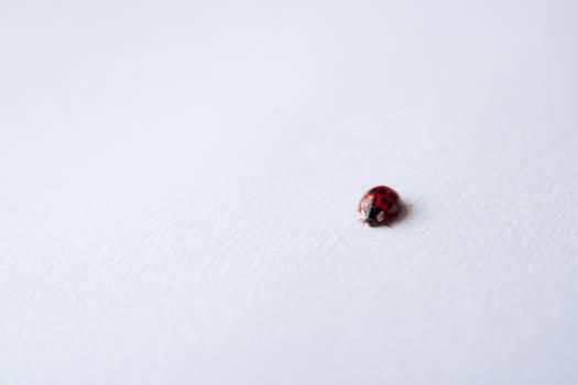 Ladybug Insect #409385