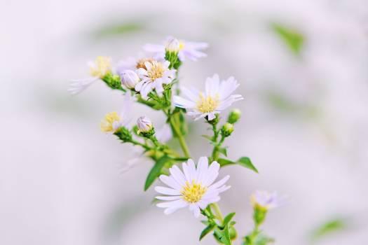 Close Up Photo of White Petaled Flower With Yellow Stigma Free Photo
