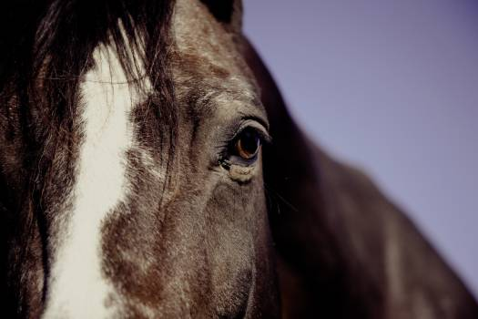 Horse Face in Focus Phography Free Photo