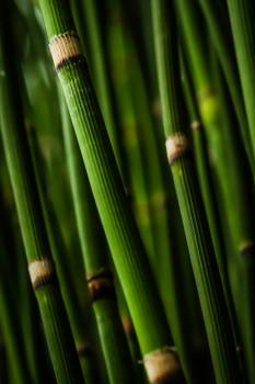 Bamboo tree close up green #40999