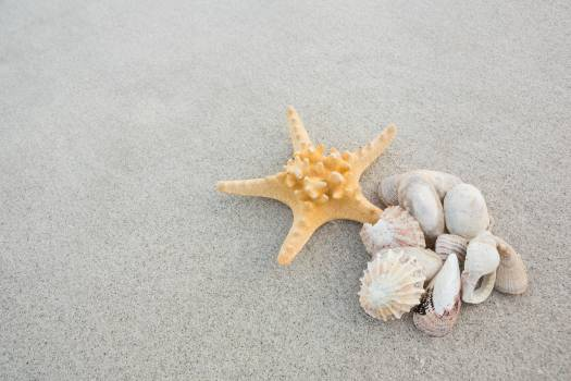 Starfish and shells on sand #410006