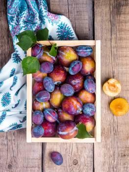 Plum Fruit Food #410050