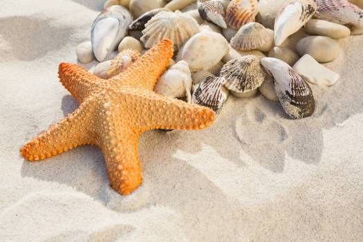 Close-up of pebbles, starfish and various sea shells on sand Free Photo