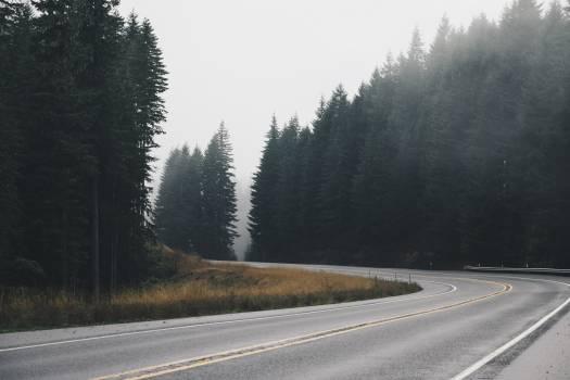 Road Pine Trees #410089