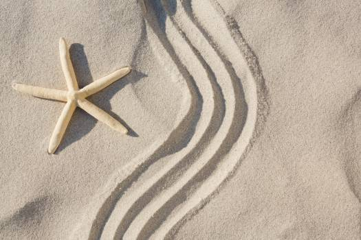 Starfish and zen pattern on sand Free Photo