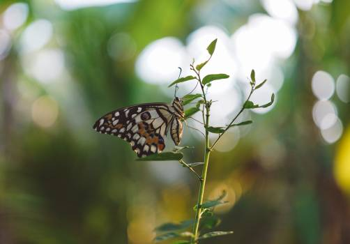 Brown Black White Butterfly on a Green Leaf Plant Close Up Photography #41033
