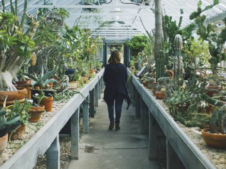 Woman in Black Cardigan Walking Between Cactus Plant #41034