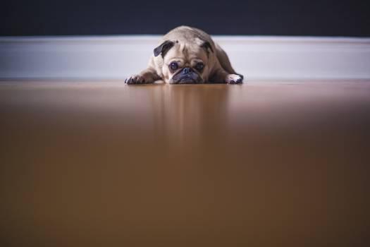 Dog Puppy #410423