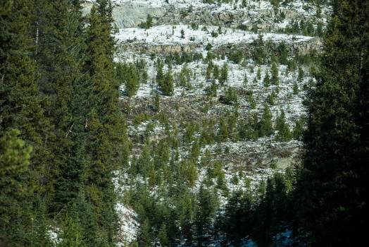 View of pine trees #410529