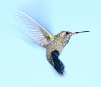 Flight nature bird flying Free Photo