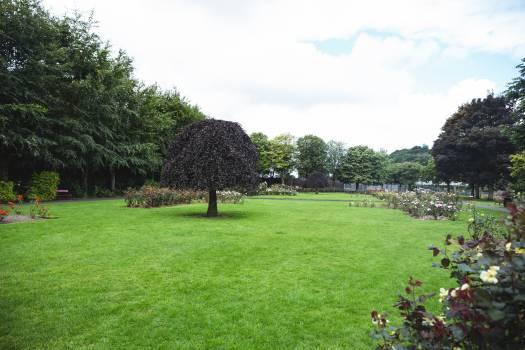 View of trees in garden #410708