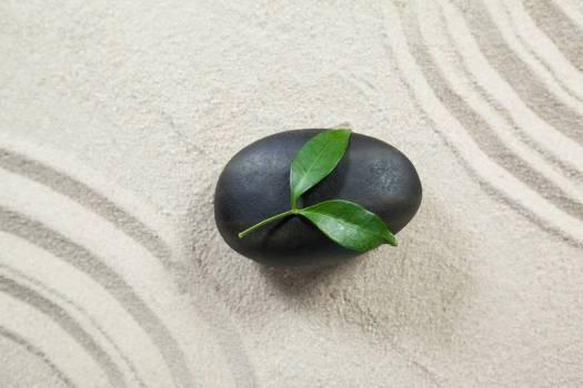Leaves on black pebble stone Free Photo