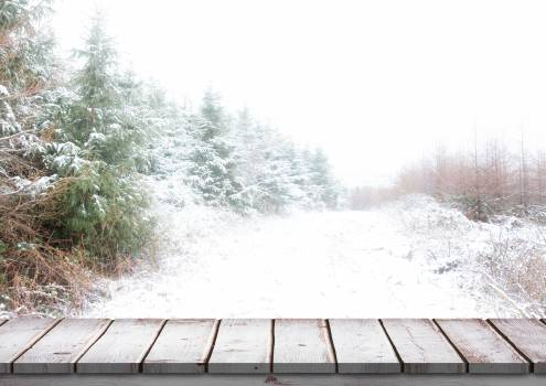 Wooden bridge with snow covered trees in background #410995