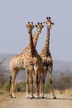 Pattern formation wild animals south africa Free Photo
