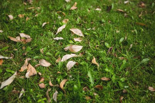 Dry leaves fallen on green grass Free Photo