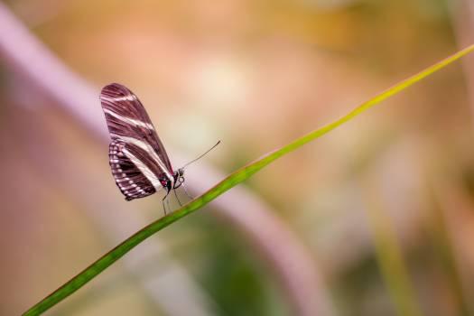 Butterfly #411256