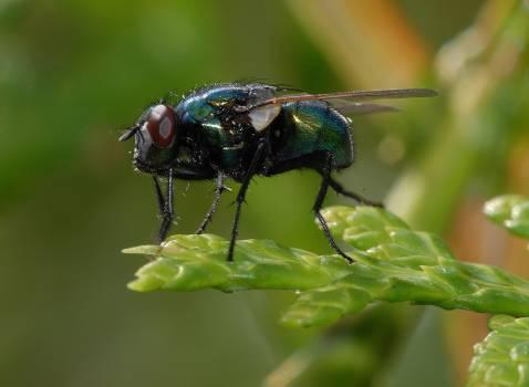 Closeup Insect Leaf Free Photo #411448