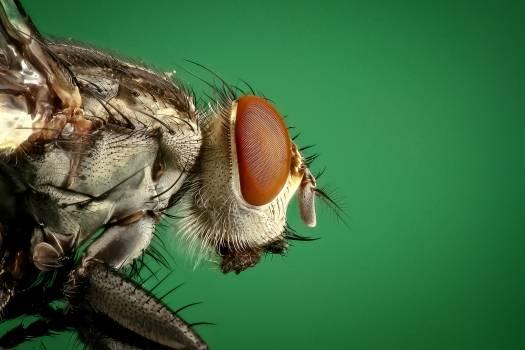 Housefly #411602