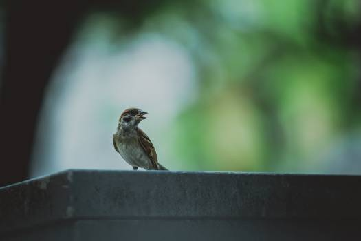 Brown Bird in Grey Concrete Wall Free Photo