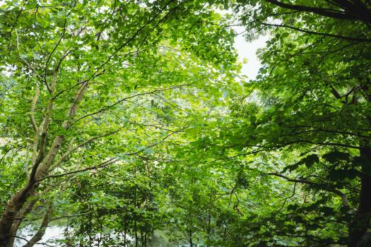 View of green forest #412732