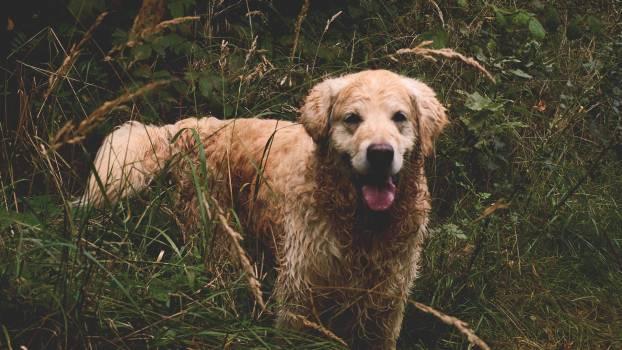 Animal canine cute dog #41273