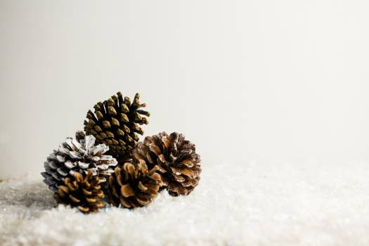 Pine cone decoration on fake snow Free Photo