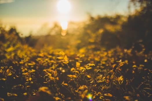 Flowers Sunset Bokeh Free Photo #413096